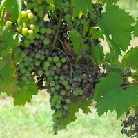Wineries and Cuisine Tours